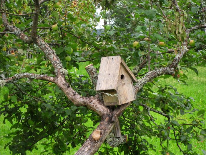 скворечник на дереве, куда прикрепить скворечник, плохое место для скворечника