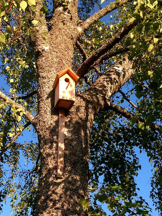 скворечник на дереве, куда повесить скворечник, как укрепить скворечник к дереву