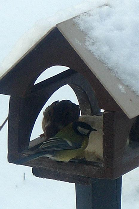 кормушка для птиц, корм для птиц, синица и воробей в кормушке, белый хлеб для птиц