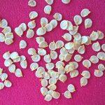 Февральские и мартовские сроки посева семян перцев на рассаду