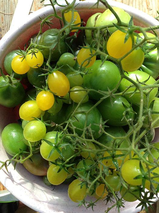 томаты-черри, черри, томаты, сорта томатов черри, томаты черри жёлтого цвета