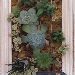 Живые картины (фитокартины) с суккулентами и другими растениями