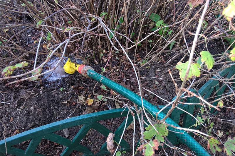 осенний полив, влагозарядный полив, влагозарядковый полив, полив осенью повышает зимостойкость растений, полив кустарников осенью