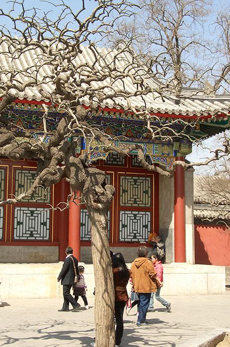 китайский вариант формирования деревьев, ажурная крона дерева, фасонистая стрижка кроны дерева, Китай, дерево, фигурная стрижка дерева