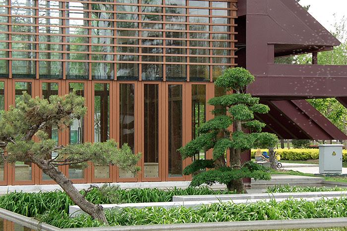 садовые бонсаи в Китае, китайский вариант формирования деревьев, ажурная крона дерева, фасонистая стрижка кроны дерева, Китай, дерево, фигурная стрижка дерева