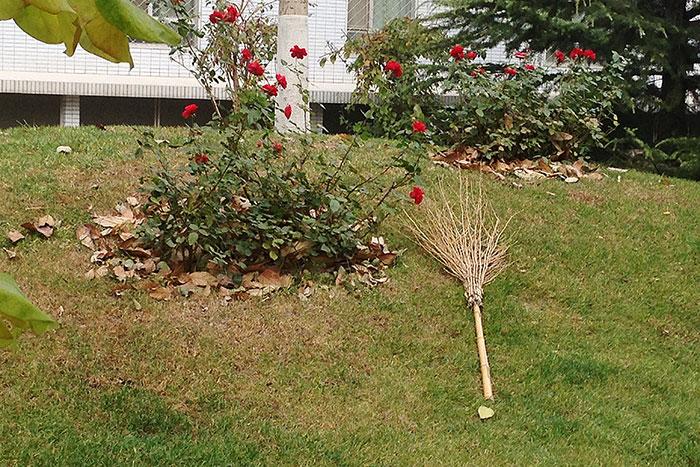 метла китайского садовника, китайский двор