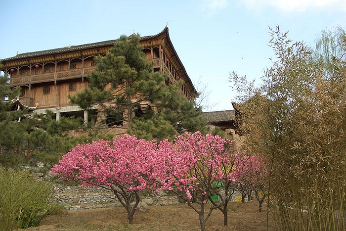 китайские сады, цветение деревьев в Китае, формирование цветущих деревьев в Китае,