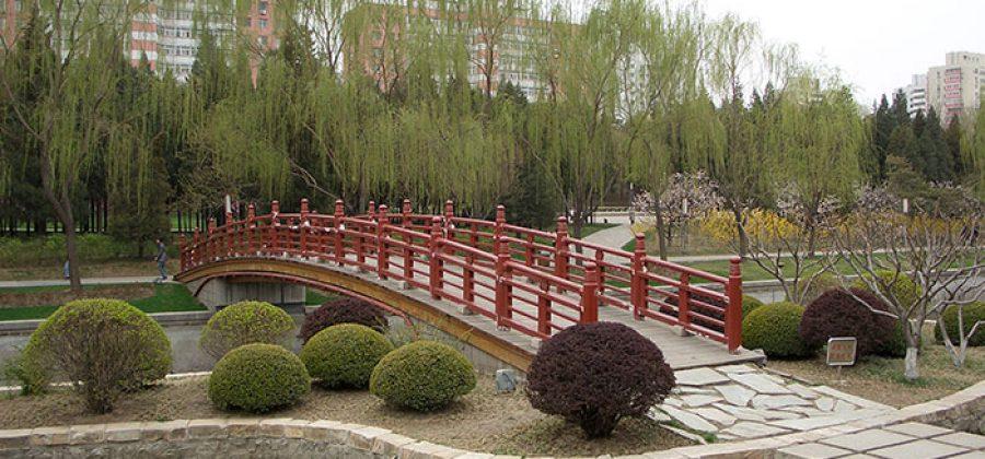 Китайский сад: принципы формирования деревьев и кустарников
