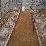 Как я укрываю виноград в теплице перед суровой зимой