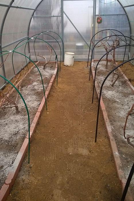 укрытие винограда на зиму, утепление винограда осенью, подготовка винограда к зиме, виноград в теплице
