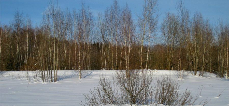 Власьевские морозы в конце февраля. Святой Власий. Приметы погоды