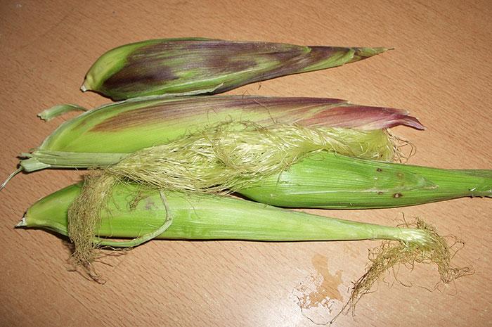 кукуруза, зерновая кукуруза, зёрна кукурузы, декоративная кукуруза, початки кукурузы, выращивание кукурузы, сорта кукурузы