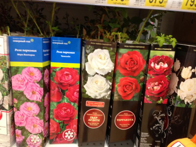 саженцы в коробках, покупаем саженцы с февраля по апрель, как сохранить посадочный материал, качество саженцев, какие саженцы можно покупать, саженцы с распустившимися побегами, саженцы роз, саженцы с открытой и закрытой корневой системой