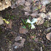 Прошлогодние опавшие листья на нашем участке этой весной