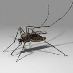 Комары в Подмосковье и «Лихорадка западного Нила»