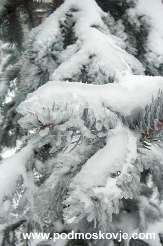"""""""Хопси"""" после ледяного дождя"""
