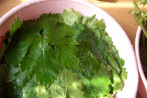 Листья винограда нужно вымыть