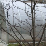 Теплица из поликарбоната: подготовка к зиме, возможные проблемы в зимнее время
