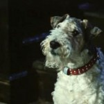 Собачий гороскоп для собаки — Овна