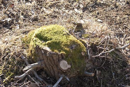Лесной пень