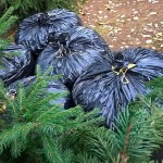 Что делать с осенними опавшими листьями?